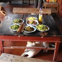 Food china